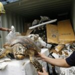 Thousands of endangered species seized in PHL