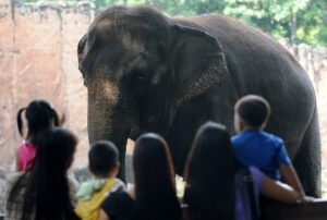 PEOPLE look at an elephant in Manila Zoo, one of the few new animals in the 52-year-old institution, on July 14, 2011. Philippine President Benigno Aquino's office has called on government agencies to look into the zoo after a blog from a college student about showing starving and sick animals at the zoo kicked off an Internet furore. Amid the widespread concern about the facility, Manila Zoo officials said the pictures of poorly-treated animals were at least three years old and that conditions had improved.(MNS photo)