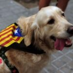 Twitter index: September 11, National Day of Catalonia