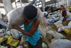 A sack of rice gives way as a man salvages rice at a destroyed warehouse after super typhoon Haiyan battered Tacloban City, in central Philippines on November 15, 2013. The death toll the powerful typhoon were more than 2,000.  (MNS photo)