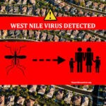 West Nile Virus Weekly Update